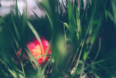 落ちて咲いて生きて