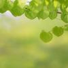 Green Heart..♡