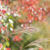 Autumn glow..**