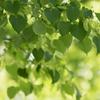♡~Green Heart