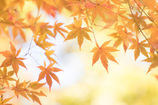 Orange..♪