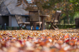 Autumn Park♪