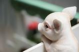 Piglet..♪