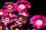 *Flower shape*