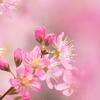 Pink..♡