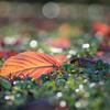 To fallen leaves