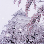 雪桜と鶴ケ城