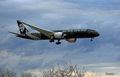 「SKY」Air NZ' 787-9「All Blacks」ZK-NZE着陸