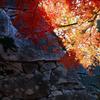 里の彩 - 石垣の秋2