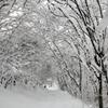 Morioka-shi - 啄木詩の道