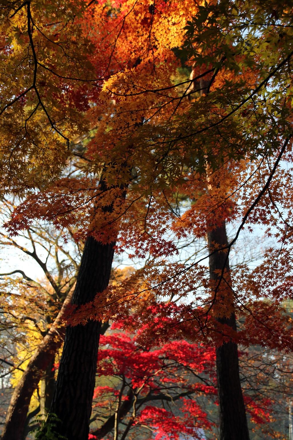 紅葉散歩Ⅳ