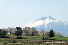 鯉の滝登り - 八幡平市総合運動公園