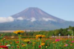 山中湖 花の都公園富士山
