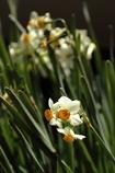 春の予感 180214-044