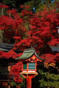 秋色の美しさ