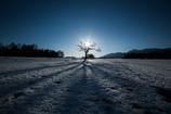厳冬に佇む老木