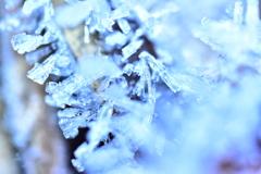 霜柱のクリスタル