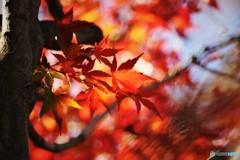 残る秋を求めて、、、ⅲ