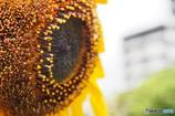 太陽神-Ⅱ