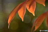 紅葉、、、。