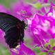 黒とピンク