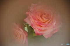 薔薇の誘惑ー②