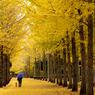 秋彩の散歩道