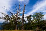 秋空と枯れ木