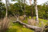 枯れ木の道