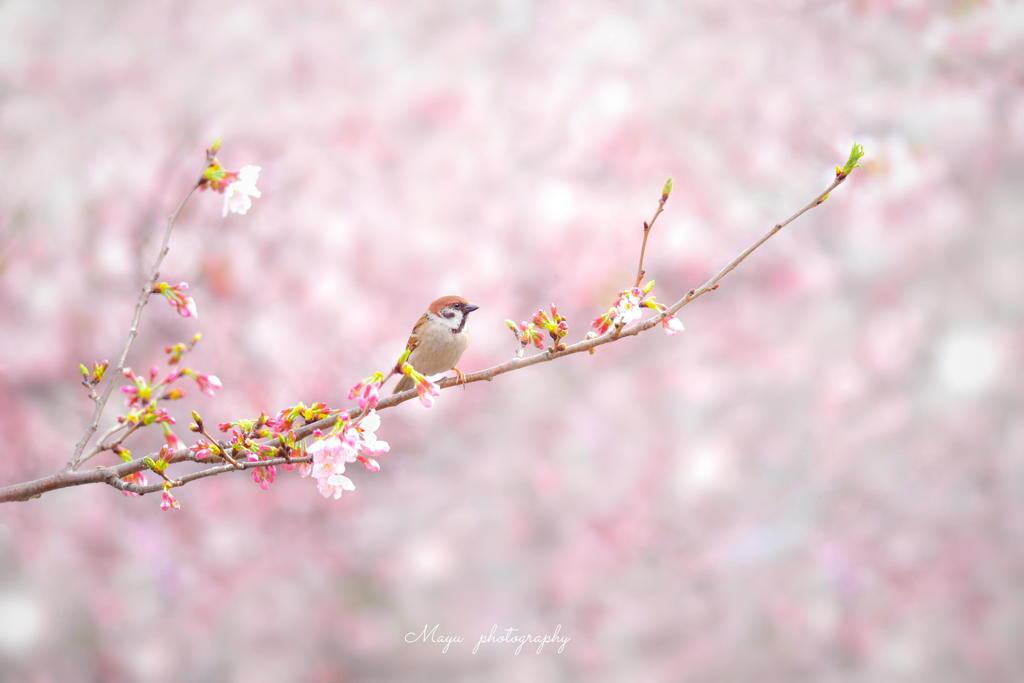 春色すずめ