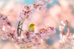 春がくるよ~♪