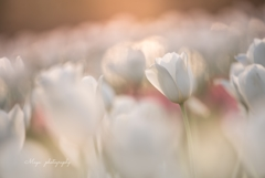 spring twilight