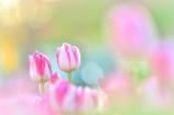 春をかんじて