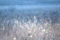 霧氷の宝石