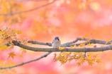 秋色のなかで