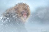 雪にもマケズ