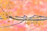 秋色のチュン