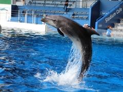 イルカの飛び出し