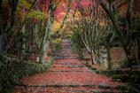 雨の紅参道
