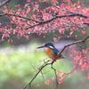 桜散らしの日