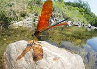 OLYMPUS E-M1で撮影した(オレンジ色の季節)の写真(画像)