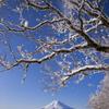 富士三昧447 樹氷