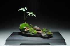 裏ワザ40 癒しの苔盆栽 里山の風景