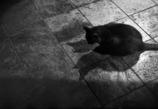 ネコの居る日常 - 44