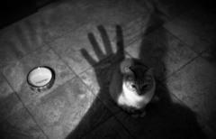 ネコの居る日常 - 50