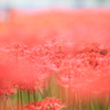 野原いっぱいの花束