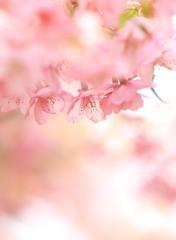 桜をくぐって…