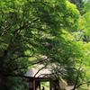 深緑の山荘