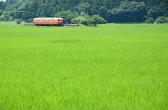 緑の中の駅