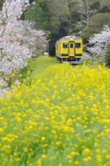 花咲く沿線③